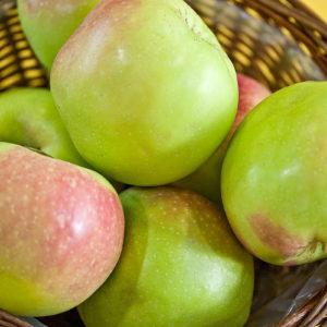 Malus Apple Gloria